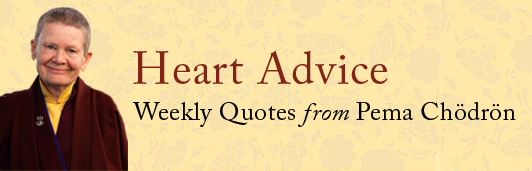 Heart Advice by Pema Chodron