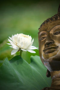 Lotus Buddha Oṃ maṇi padme hūṃ